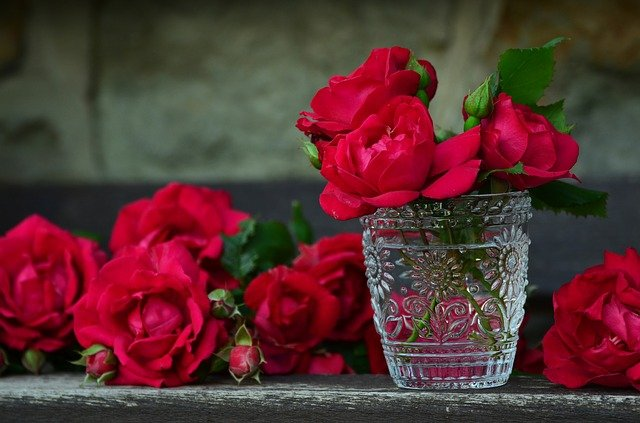 バラの画像。