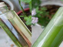 2種類のミントシロップの画像。